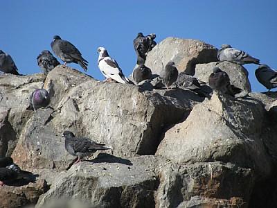 imágenes gratis prod06,ave,aves,pajaro,pajaros,animal,animales,pal