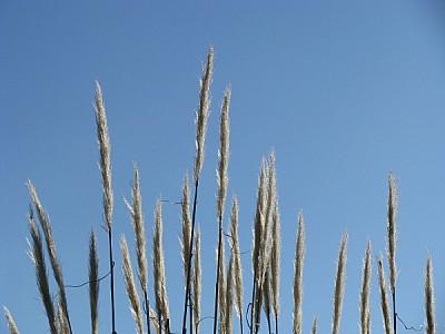 prod06,fondo,background,paisaje,campo,escena rural