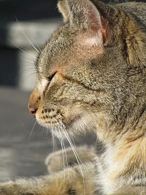 imágenes gratis prod06,animal,animales,primer plano,vista de frent