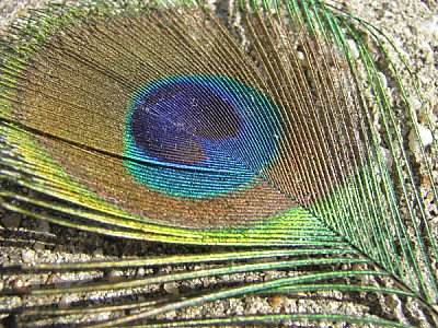 prod06,pluma,plumas,ave,aves,color,colores,colorid