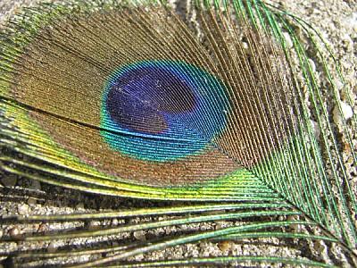 imágenes gratis prod06,pluma,plumas,ave,aves,color,colores,colorid