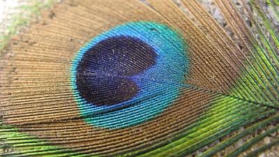 imágenes gratis Pluma Colorida