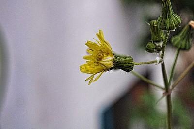 imágenes gratis ,prodjune2010,flor,flores,naturaleza,jardin,planta