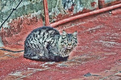 ,prodjune2010,AGO2010,gato,animal,mascota,terraza,