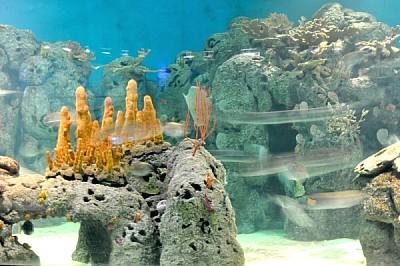 imágenes gratis ,acuario,pez,peces,interior,luz,luces,iluminado,co