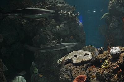 imágenes gratis ,interior,mar,acuario,nadie,vista de frente,pez,pe