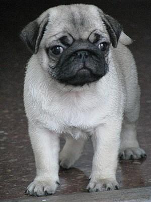 imágenes gratis ,animal,animales,mascota,mascotas,cachorro,pequeñ