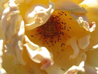 imágenes gratis Aroma de primavera