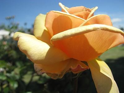 imágenes gratis Flor en plena primavera