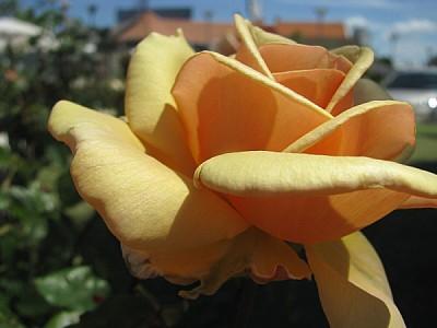 imágenes gratis Flor creciendo en el jardin