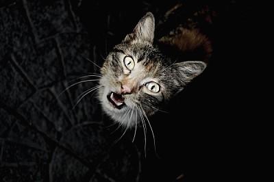 ,animal,animales,gato,gatos,mascota,mascotas,vista