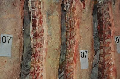 carne, res, colgadas, frigorifico, horizontal, fot