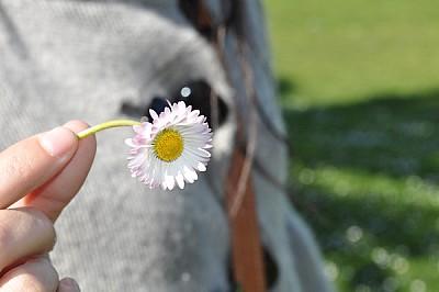 flor, enfoque preferencial, primer plano, de cerca