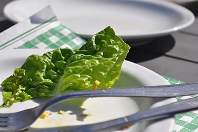 exterior,almuerzo, soleado, de dia, lechuga, verde