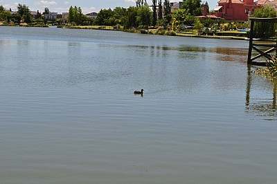 lago, paisaje, cisne, agua, tranquilidad, turismo,