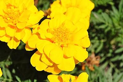 imágenes gratis flor, exterior, de dia, verde, naturaleza, aire li