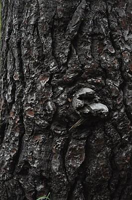 exterior, tronco, madera, arbol,  añejo, naturalez
