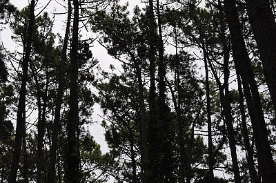 imágenes gratis exterior, bosque, naturaleza, verde, de dia, paisa