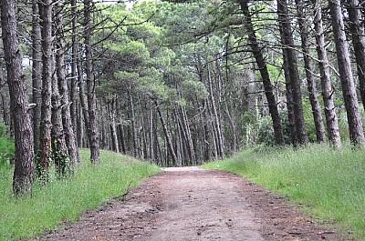 imágenes gratis exterior, de dia, camino, tierra, campo, bosque, a
