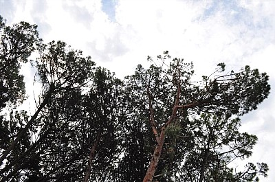 imágenes gratis exterior, de dia, arboles, bosque, naturaleza, nub