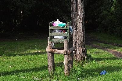 imágenes gratis exterior, de dia, arboles, bosque, naturaleza, veg