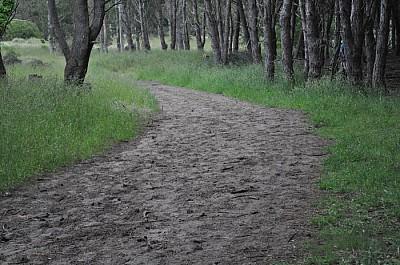 exterior, naturaleza, campo, arboles, camino, paz,