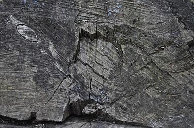 exterior, naturaleza, madera, seco, otoño, vista d