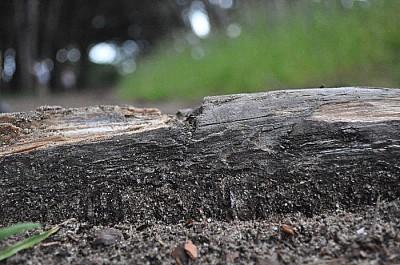 exterior, naturaleza, madera, seco, otoño, imagen