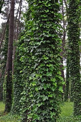 exterior, naturaleza, bosque, arboles, vertical, c