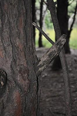 exterior, naturaleza, arboles, bosque, ramas, seca