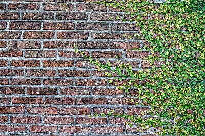 imágenes gratis Fondo pared Ladrillo con Enredera