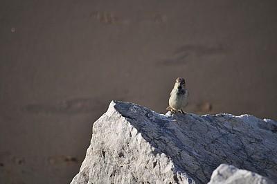 Ave sobre Roca