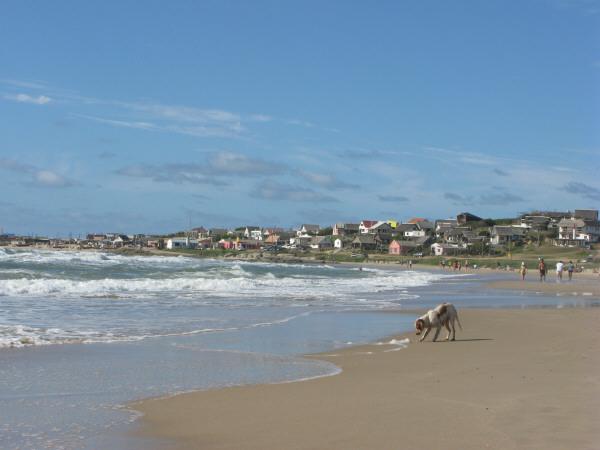 playa,arena,verano,dia,aire libre,exterior,perro,perros,animal,vista de frente,agua,mar,costa,espuma,cabo polonio,uruguay,america del sur,america,america latina,baño,bañandose,paisaje,ciudad,observando,mirando,mirar,