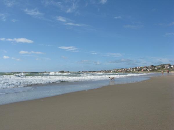 playa,arena,verano,dia,aire libre,exterior,perro,perros,animal,vista de frente,agua,mar,costa,espuma,cabo polonio,uruguay,america del sur,america,america latina,baño,bañandose,paisaje,ciudad,observando,mirando,mirar,piso,