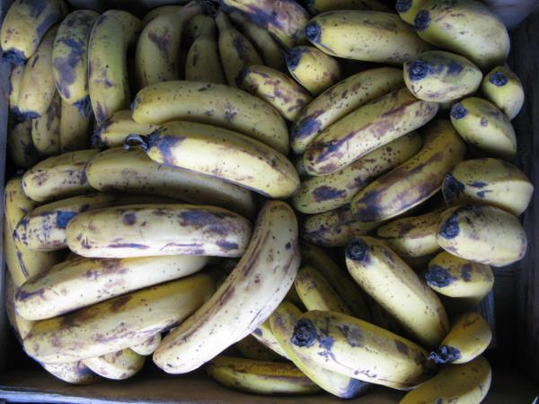 fruta,frutas,banana,bananas,vista de frente,verde,verdes,inmaduro,inmaduras,fondo,background,naturaleza,color,cosecha,cultivo,verduleria,venta,