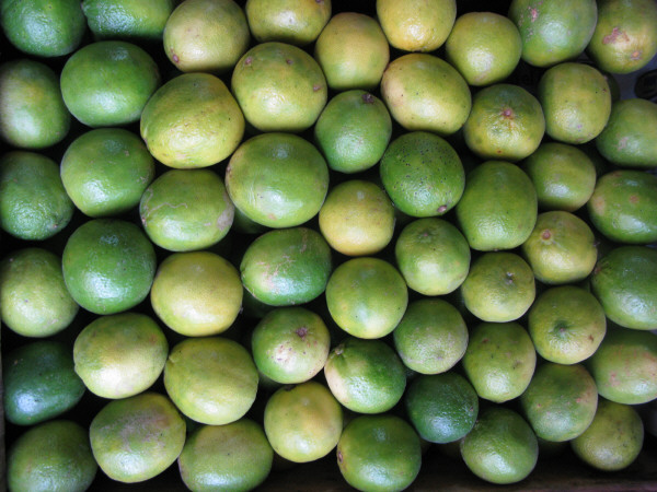 fruta,frutas,limon,limones,vista de frente,verde,verdes,fondo,background,naturaleza,color,cosecha,cultivo,verduleria,venta,