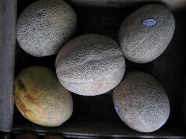 fruta,frutas,naranja,naranjas,limones,vista de frente,verde,verdes,fondo,background,naturaleza,color,cosecha,cultivo,verduleria,venta,