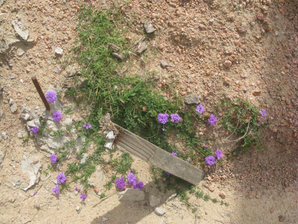 tierra,flor,flores,color,colores,naturaleza,vista de frente,