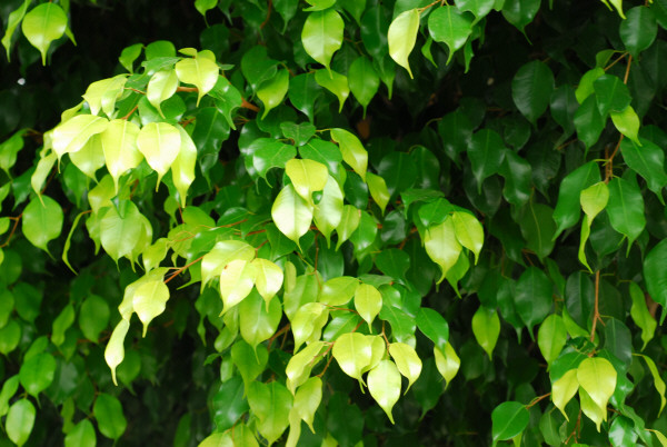 Imagen de hoja hojas verde planta plantas vista de frente - Plantas de hojas verdes ...