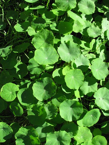 Descargar fondos de pantalla hojas verdes de plantas hd - Plantas de hojas verdes ...