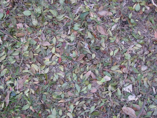 Imagen de hojas,hoja,vista de arriba,seco,secas,jardin,fondo ...