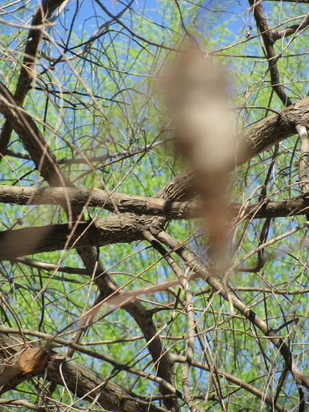 naturaleza,arbol,arboles,rama,ramas,vista de frente,primer plano,efecto de barrido,fuera de foco,hoja,hojas,