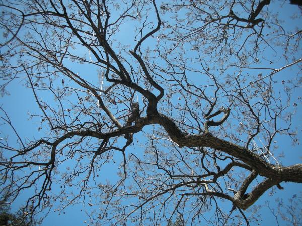 Imagen de arbol,arboles,rama,ramas,fruto,frutos,vista de aba - Foto ...
