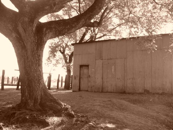 argentina,corrientes,paisaje,campo,escena rural,galpon,dia,atardecer,ocaso,puesta de sol,sepia,granero,deposito,soledad,nadie,melancolia,,prod05