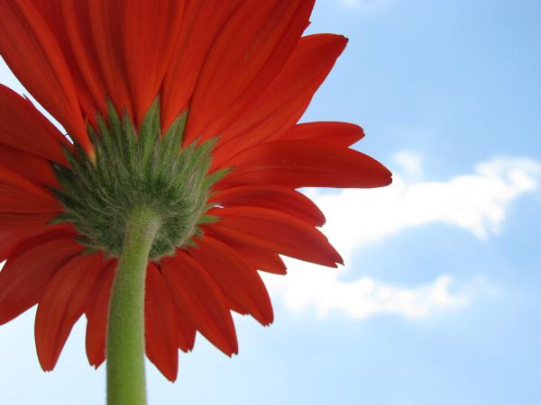 Imagen de flor,naturaleza,primavera,color,colores,colorido,v - Foto ...