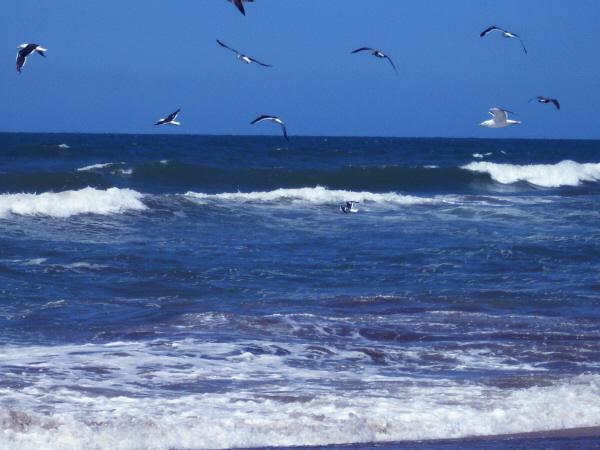 argentina,costa atlantica,playa,dia,aire libre,exterior,arena,paisaje,nadie,verano,vacaciones,piso,ave,aves,gaviota,gaviotas,mar,azul,volando,volar,paisaje,tranquilidad,relax,,prod05