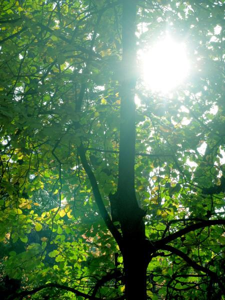 naturaleza,paisaje,bosque,arbol,arboles,sol,atardecer,ocaso,puesta de sol,verde,otoño,dia,aire libre,exterior,nadie,hoja,hojas,reflejo,,prod05