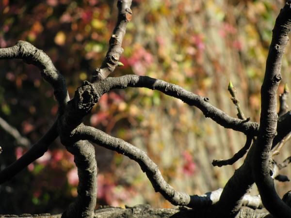naturaleza,rama,ramas,planta,plantas,fondo,background,primer plano,fuera de foco,concepto,enriedo,enredado,,prod05