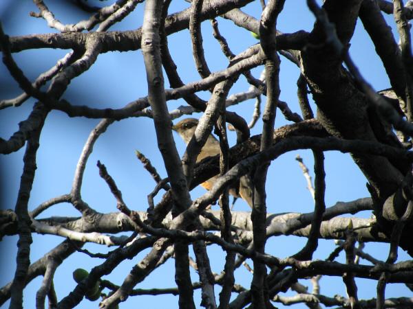ave,aves,pajaro,pajaros,gorrion,rama,ramas,escondite,escondido,esconderse,esconder,atras,posicion,quieto,serio,,prod05