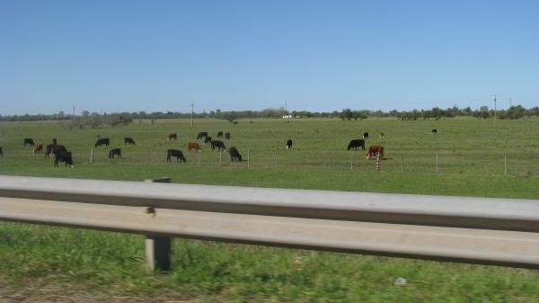 prod06,campo,escena rural,vaca,vacas,animal,animales,ganado,industria,ganadera,guard rail,rural,argentina,buenos aires,